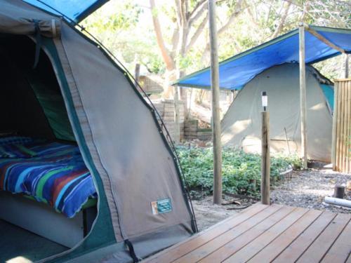 Bush dome tents